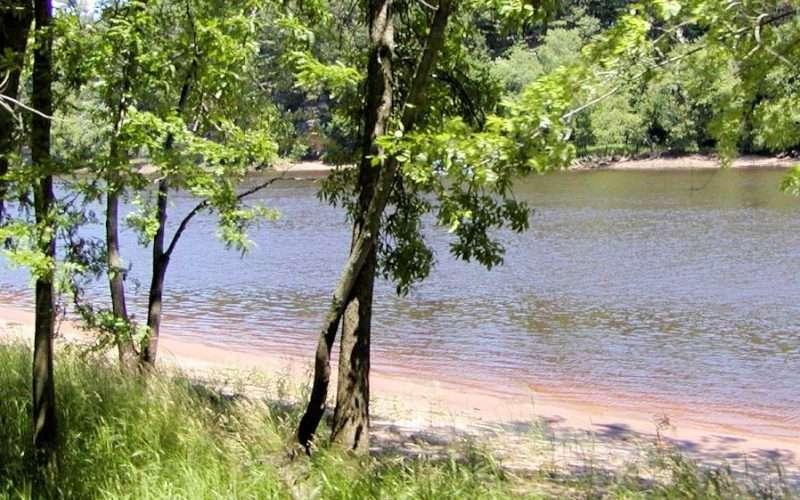 Psalm 1: Tree planted near running water